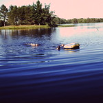 Swimming between the Islands... looks like Gene & 2 of the girls